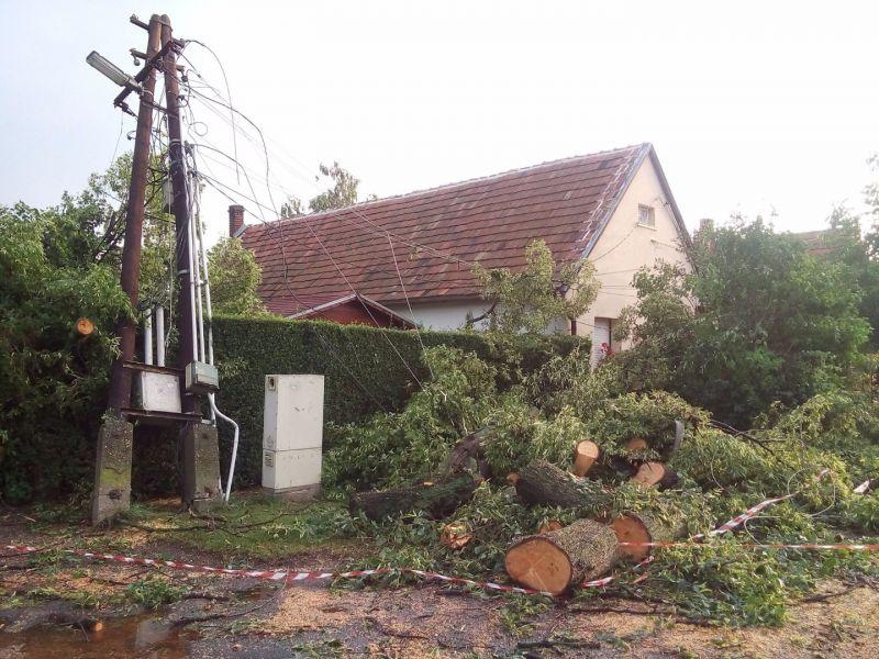 Vihar utáni zöldhulladék kezelése